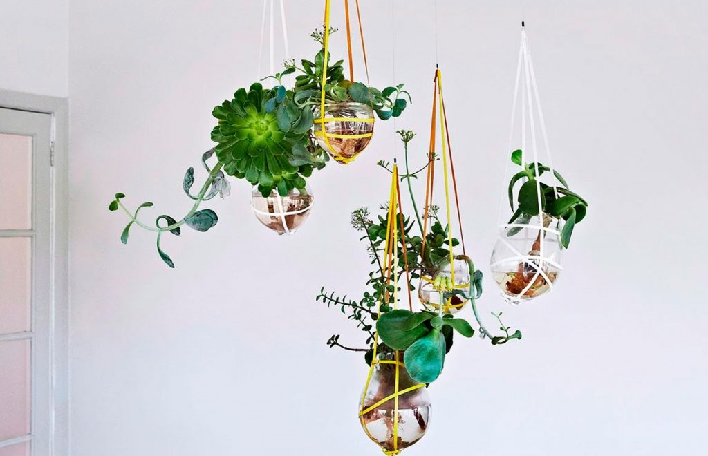 A hanging garden with terrariums.