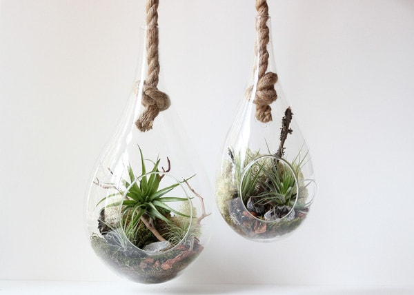 A hanging garden in the form of a terrarium that hangs on the knot of a strong rope.