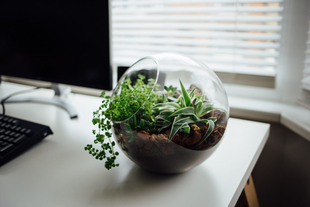 A terrarium with a succulent and other plants on  a desk.