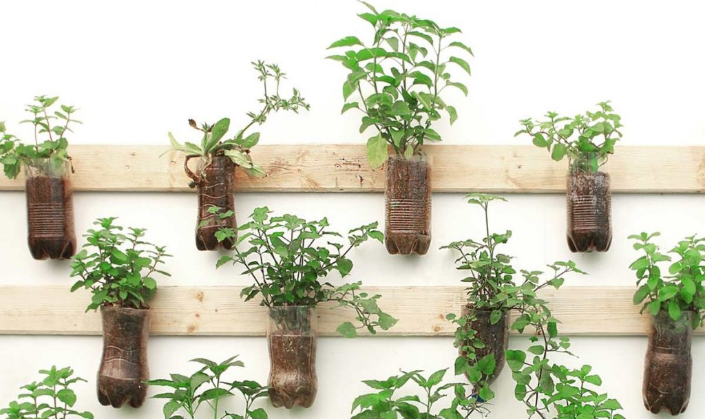 A wall garden made out of plastic bottles.