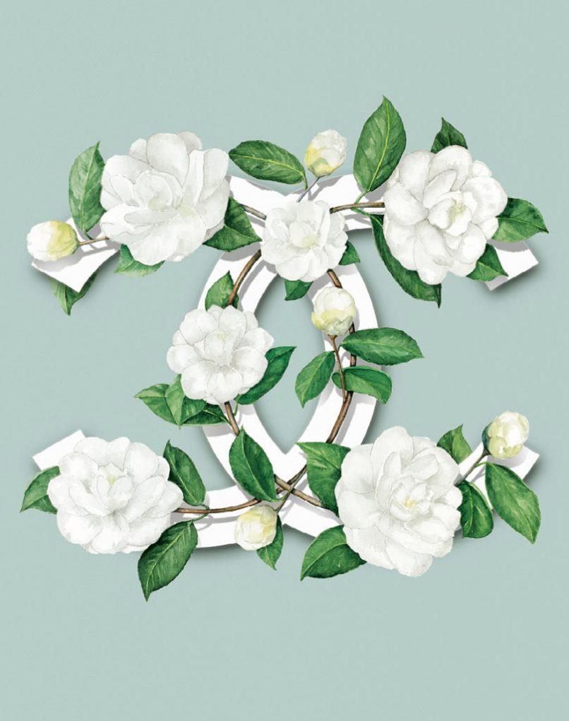 Camellia Japonica Alba Chanel symbol